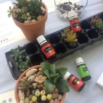 Put Essential Oils on Your Succulent